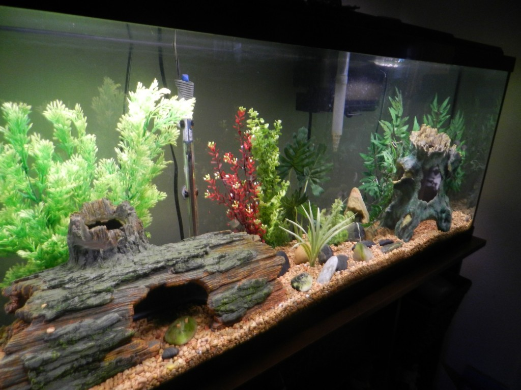 Fabulous Fish Tank Cleaning Habits To Follow Daily And