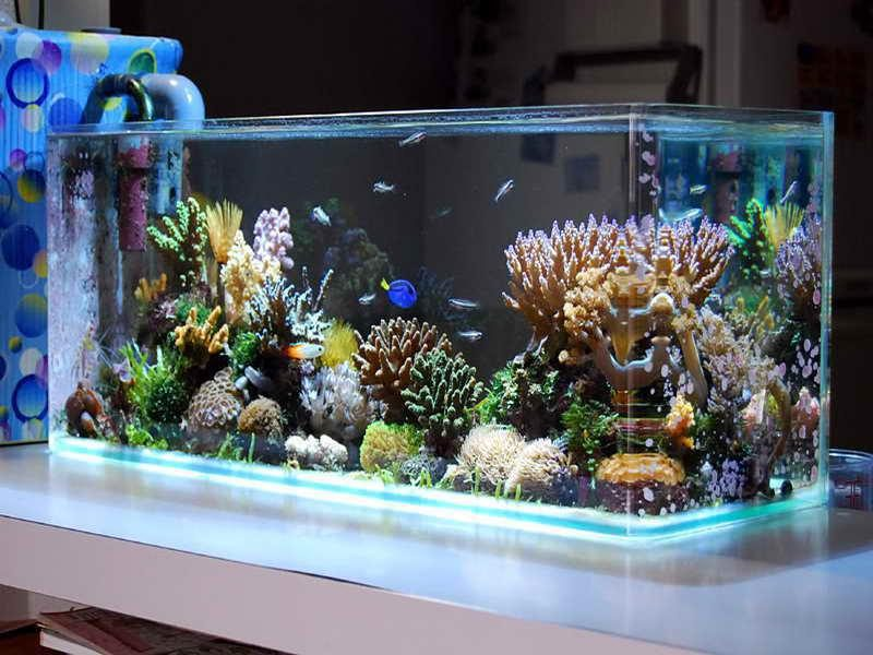 Choosing An Aquarium