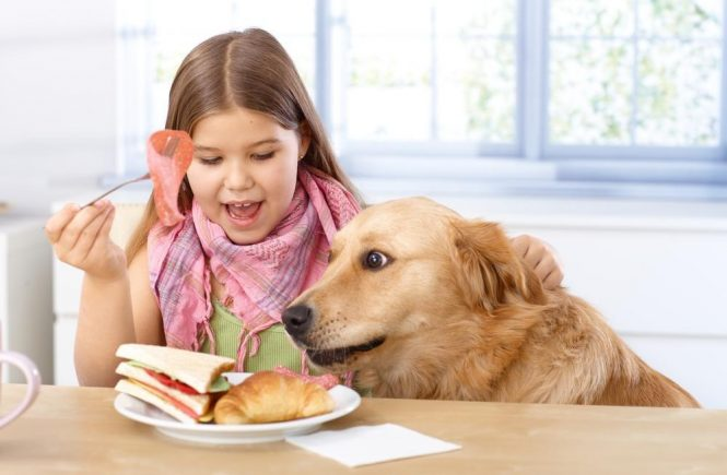 Giving Your Dog The Best Quality Food