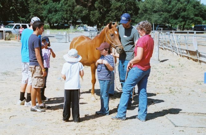 How Often Should I Take My Horse To The Vet