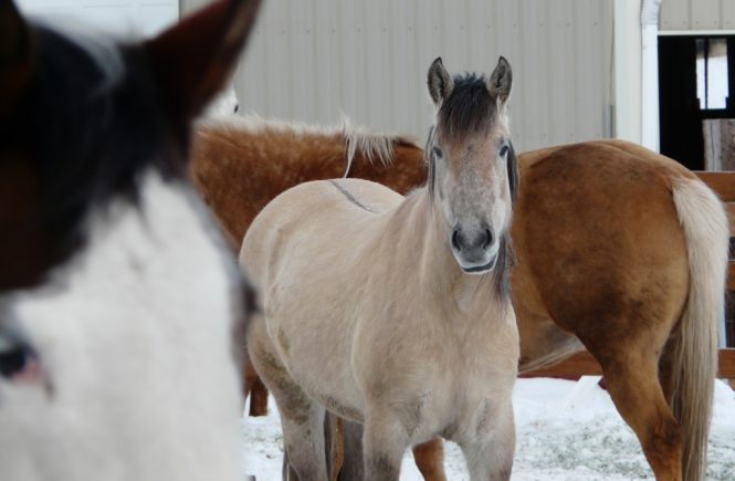 Why Winter Can Be Wonderful For You And Your Horse