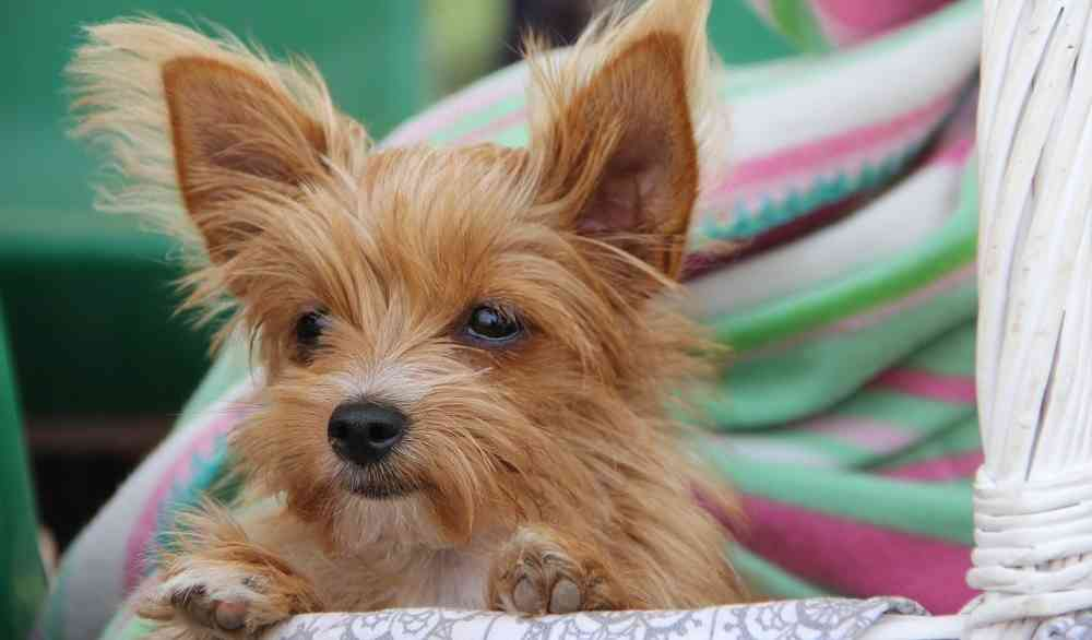 Best Puppy Brown Adorable Dog - cutest-dog-breeds-small  Picture_522035  .jpg