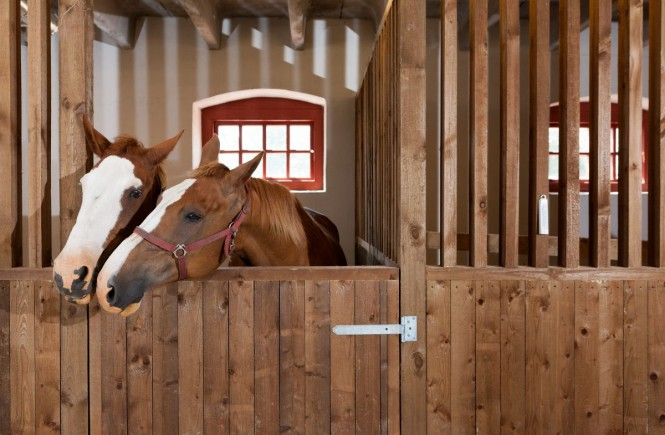 horse's stable